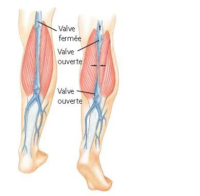 jambes-valves